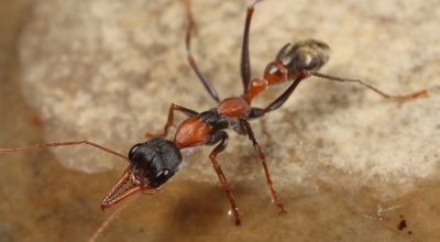 Are Ants Decomposers Or Consumers?
