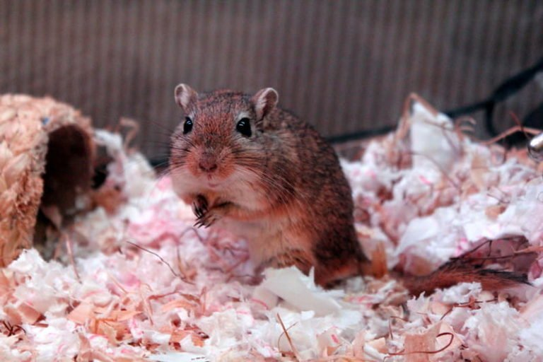 Do Gerbils Need a House? (Economic Alternatives)