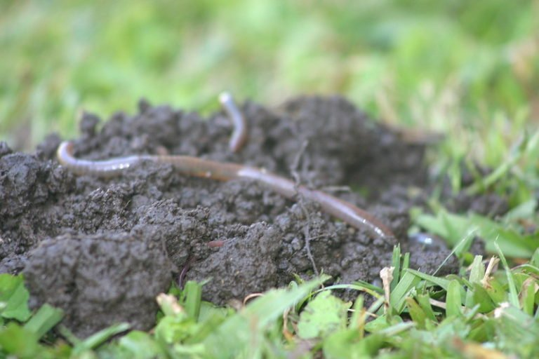 What Does Salt Do To Earthworms?
