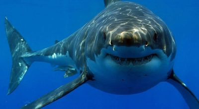 Amazing Features of The Sharks' Eyes
