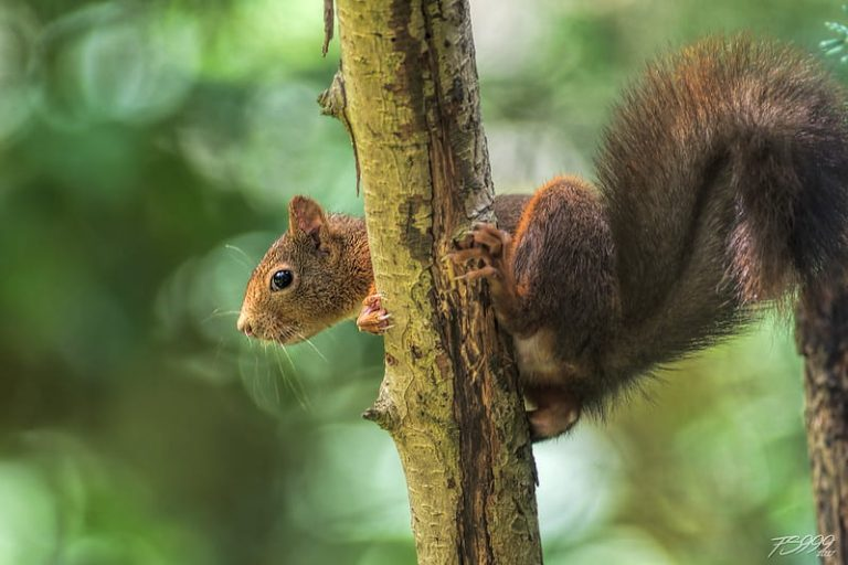 Can Squirrels Survive Any Fall? (How They do it)