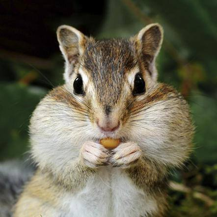 How Do Squirrels Crack Nuts? (Solved)