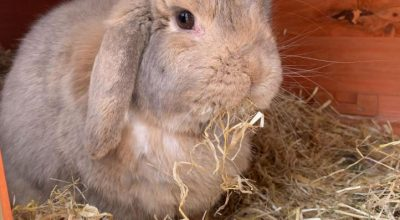 Do Rabbits Eat Straw? (Is it Safe or Toxic?)