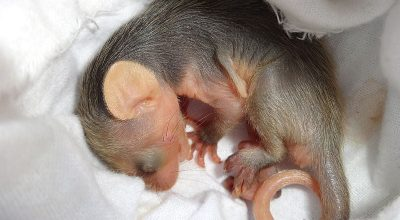 6 Animals That Are Born Blind And Deaf (With Pictures)