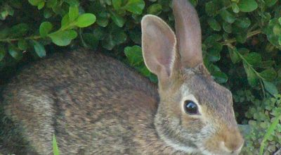 Why Does Your Rabbit Licks or Climbs On You? Does it Like You?
