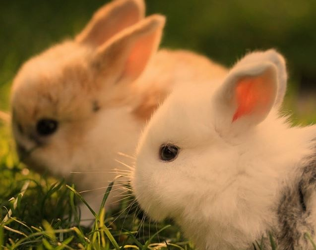 Can Rabbits Change Sex? (No!, Here's Why)
