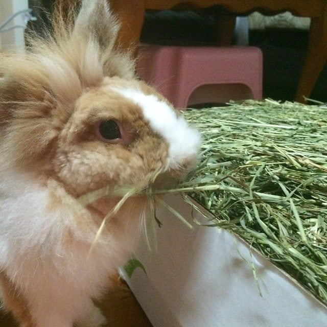 Can Rabbits Survive On Hay Alone As Food?