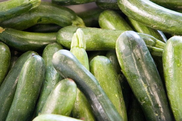 Is Zucchini Good For Birds? (Tips & Cautions)