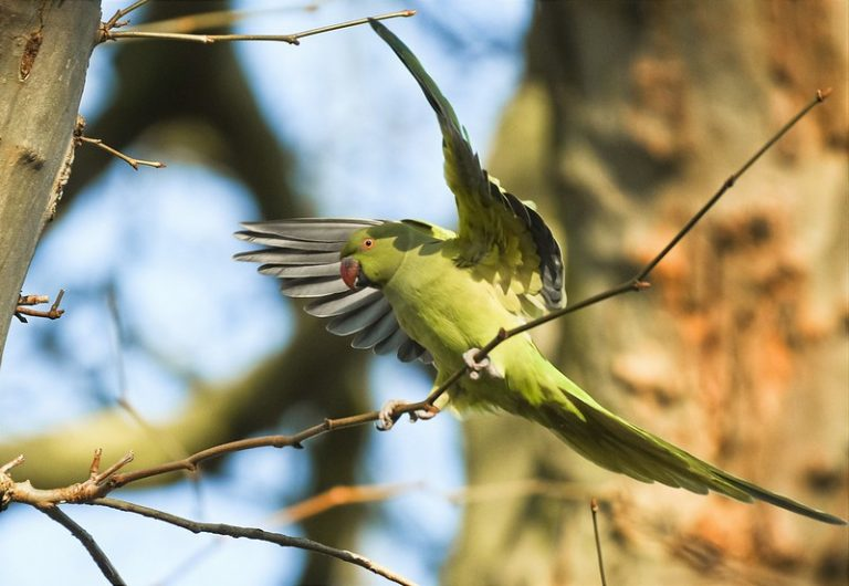 Can Parakeets Be In Direct Sunlight? (Solved)