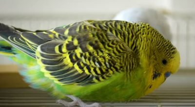 4 Main Reasons Why Your Bird Sits On The Bottom Of Its Cage