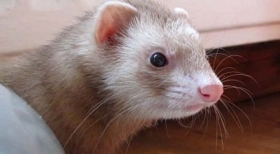 Insects That Ferrets Could Eat (You probably didn't know)