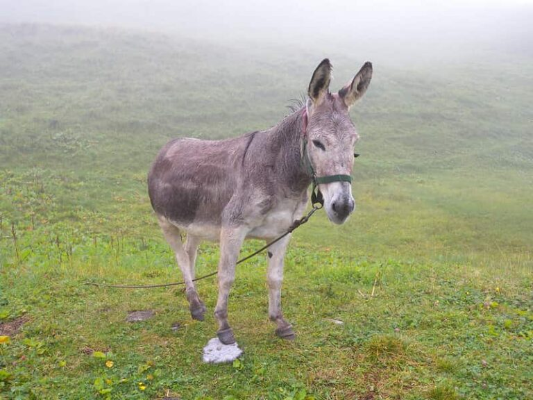 Should Donkeys Be Left Out In The Rain? (Solved)