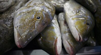 How To Tell If A Fish Has Ciguatera?