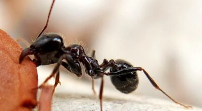 10 Interesting Facts And Behaviors About Ants